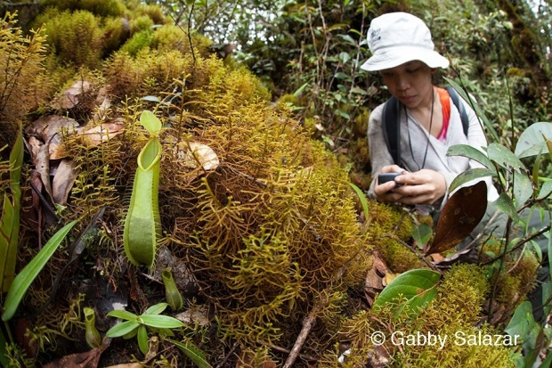 Febe records the location of a pitcher plant.