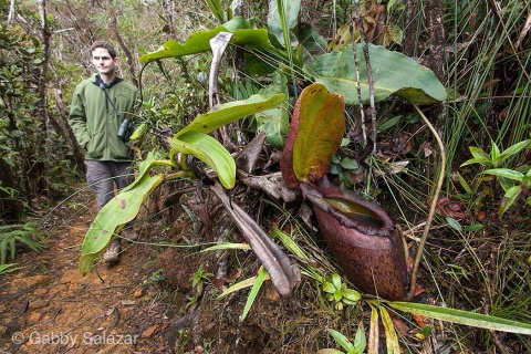 Rick walks on the trail near Nepenthes rajah