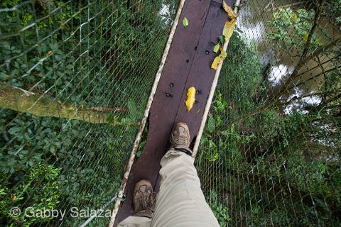 Gabby walks on the canopy walkway, Gunung Mulu National Park