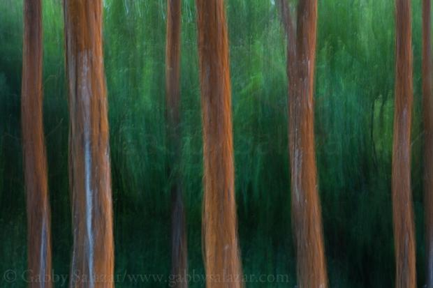 Trees near Bois Cheri Tea Plantation in the highlands near Black River, Mauritius.