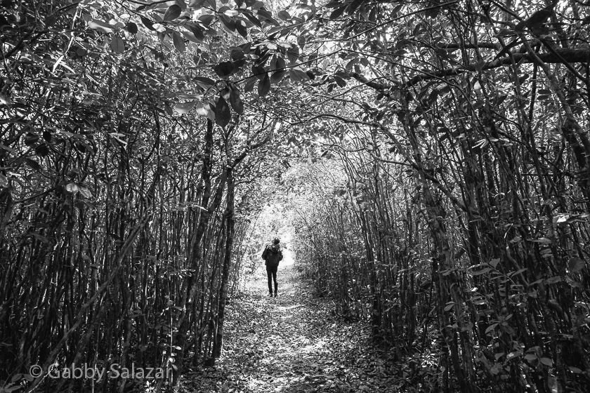 Stephanie Manuel hikes through a grove of guava trees in Black River Gorges National Park, Mauritius.